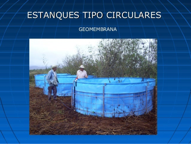 Curso de tilapia for Estanque geomembrana