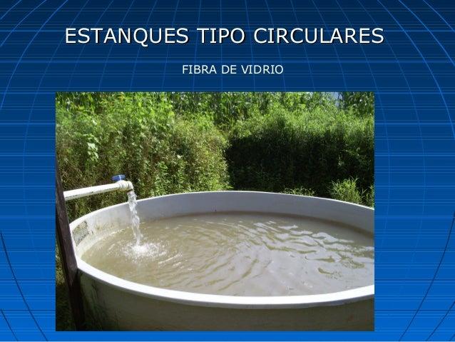Curso de tilapia for Tanques circulares para acuicultura