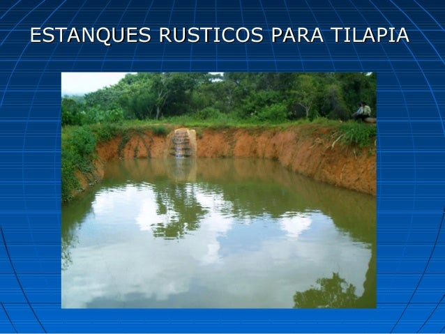 Curso de tilapia for Estanques rusticos