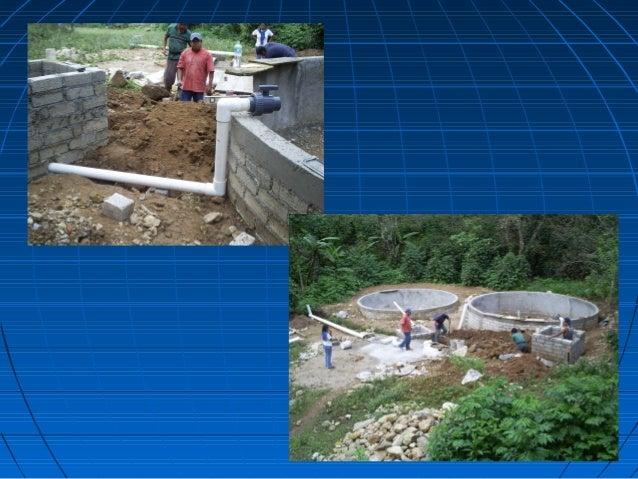 Curso de tilapia for Construccion de estanques circulares cria y engorda de mojarra tilapia