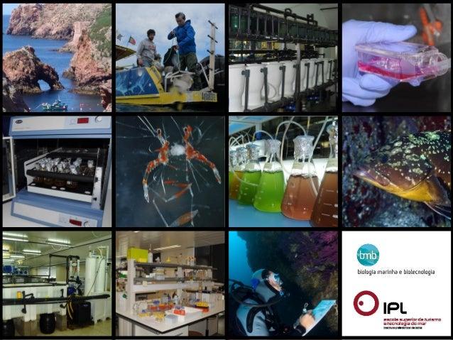 • Biologia Marinha e Biotecnologia (6 semestres | 180 ECTS)  (ramo aquacultura e pescas | ramo biotecnologia)             ...