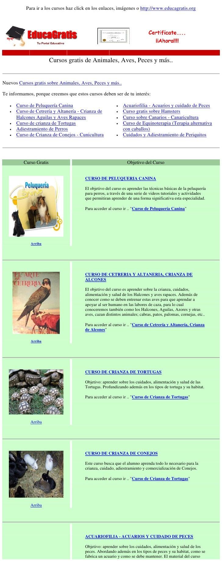 Cursos clases gratis de animales aves peces y mascotas for Curso de interiorismo gratis