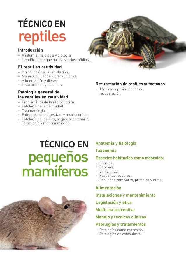 Encantador Anatomía De Los Reptiles Cresta - Imágenes de Anatomía ...
