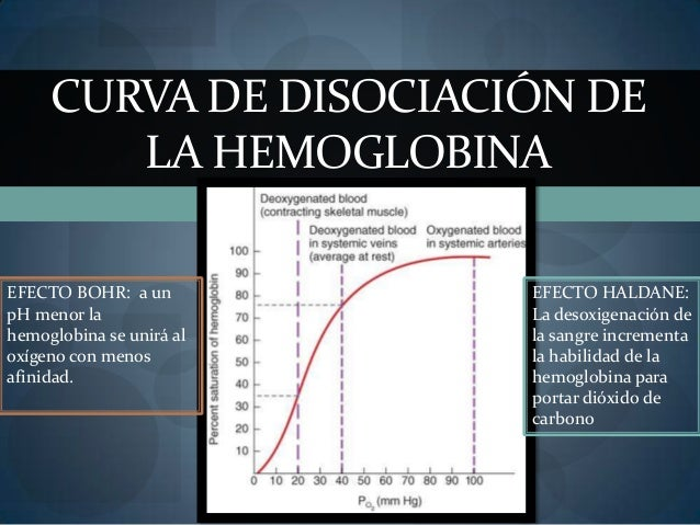 CURVA DE DISOCIACIÓN DELA HEMOGLOBINAEFECTO BOHR: a unpH menor lahemoglobina se unirá aloxígeno con menosafinidad.EFECTO H...