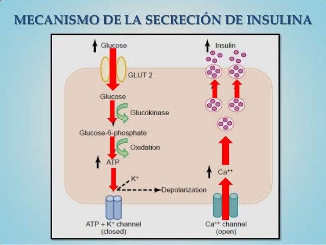 MECANISMO DE LA SECRECIÓN DE INSULINA