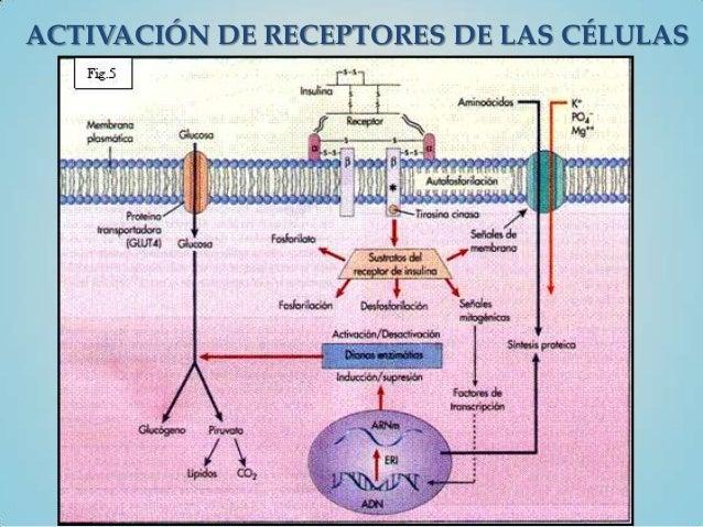 ACTIVACIÓN DE RECEPTORES DE LAS CÉLULAS
