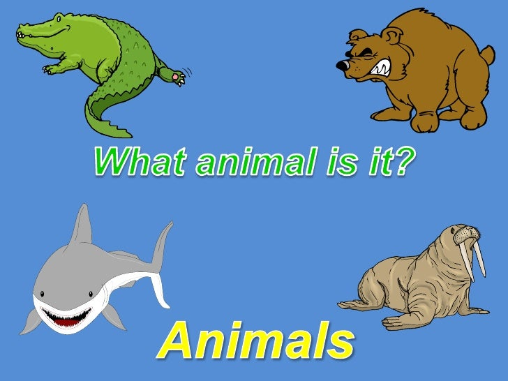 What animal is it?<br />Animals<br />