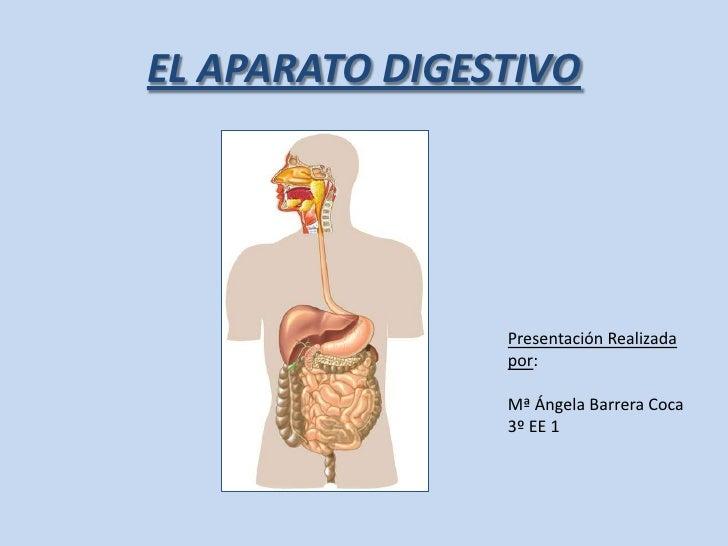EL APARATO DIGESTIVO<br />Presentación Realizada por:<br />Mª Ángela Barrera Coca<br />3º EE 1<br />