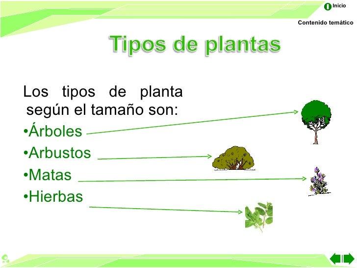 Las partes de la planta for Cuales son los tipos de plantas