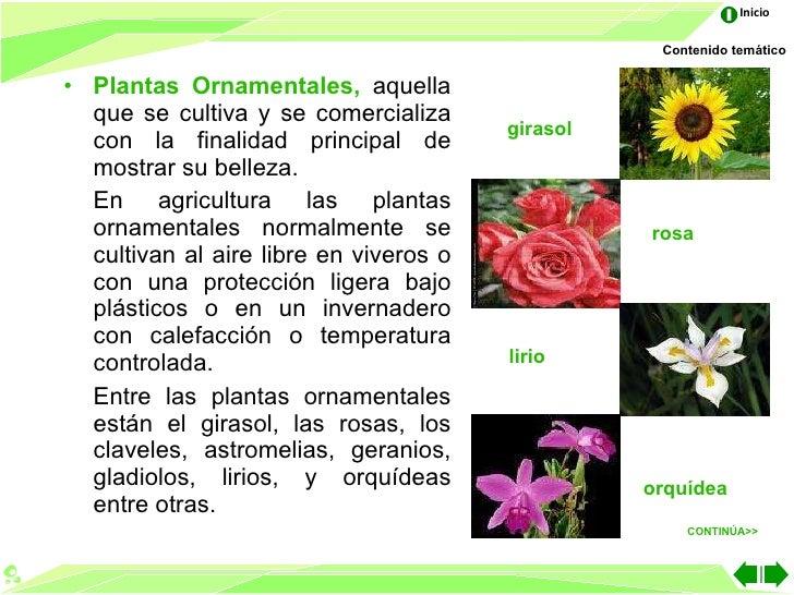 Las partes de la planta for 5 nombres de plantas ornamentales
