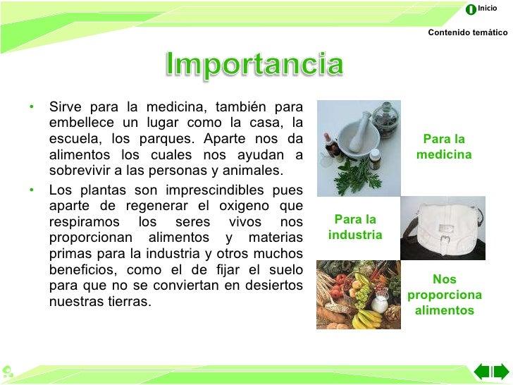Las partes de la planta for Que son la plantas ornamentales