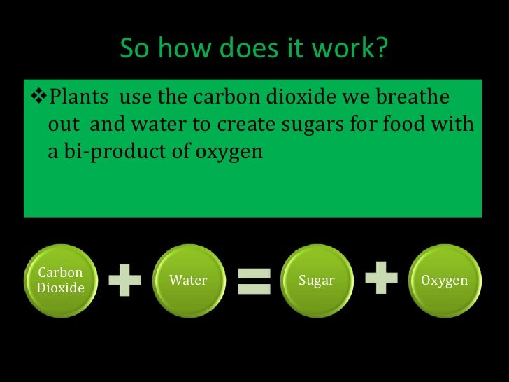 photosynthesis presentation Understand that photosynthesis is a two fold process composed of the light- dependent reactions (ie, light reactions) and the light independent reactions (ie .