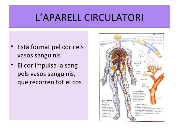 L'APARELL CIRCULATORI <ul><li>Està format pel cor i els vasos sanguinis </li></ul><ul><li>El cor impulsa la sang pels vaso...