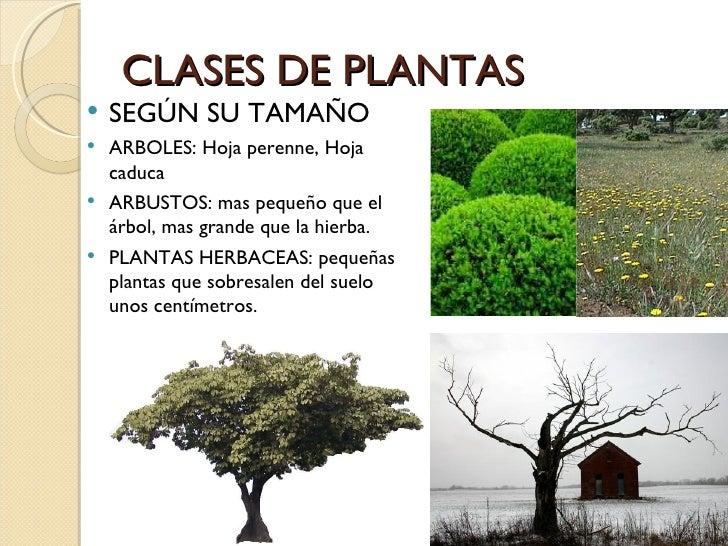 Paisajismo for Arboles para veredas hojas perennes