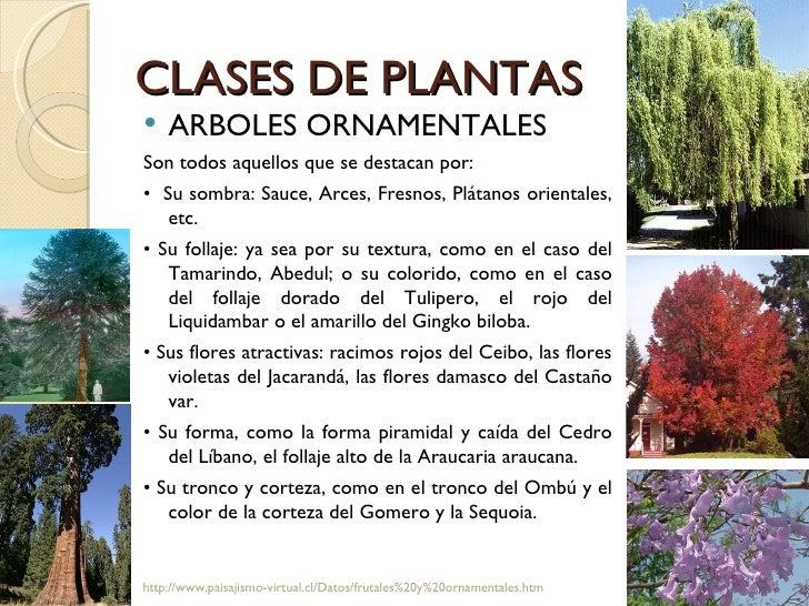Paisajismo for Plantas paisajismo