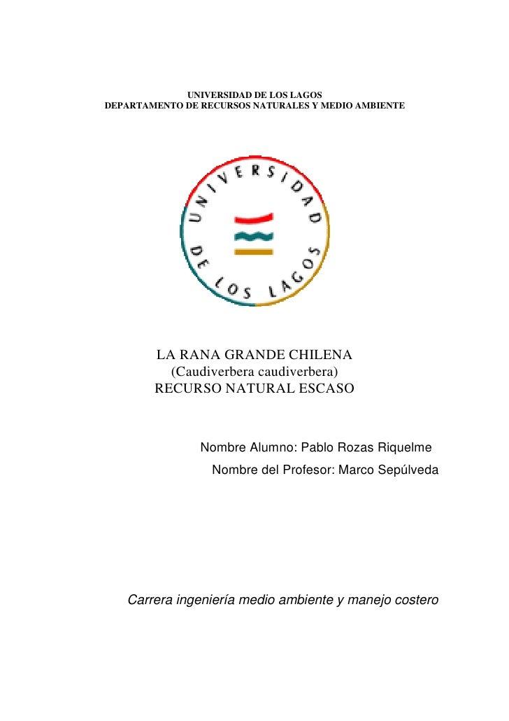 UNIVERSIDAD DE LOS LAGOS DEPARTAMENTO DE RECURSOS NATURALES Y MEDIO AMBIENTE             LA RANA GRANDE CHILENA           ...