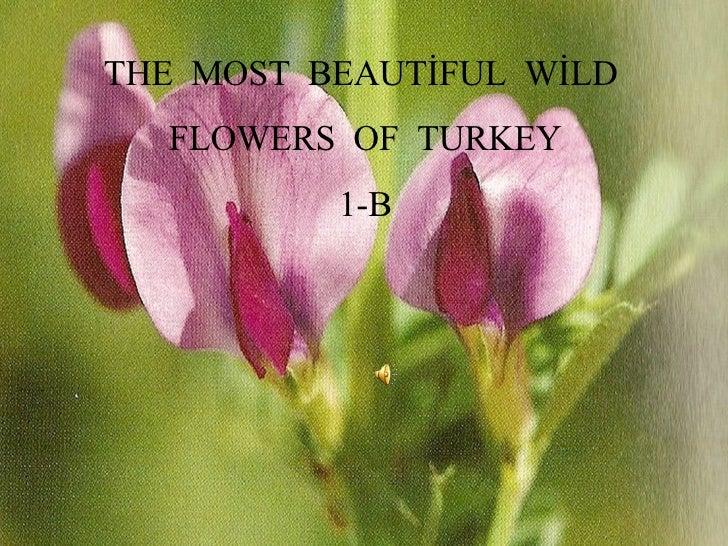 THE  MOST  BEAUTİFUL  WİLD  FLOWERS  OF  TURKEY 1-B