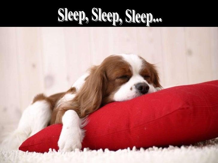 Sleep, Sleep, Sleep...
