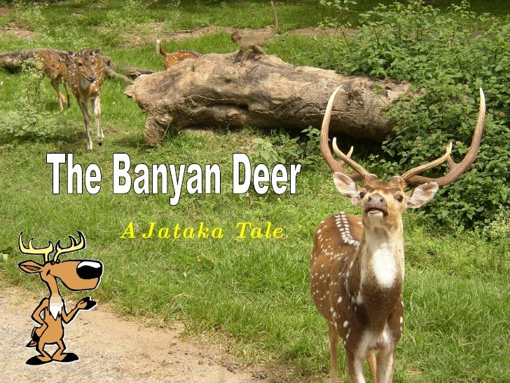 The Banyan Deer A Jataka Tale