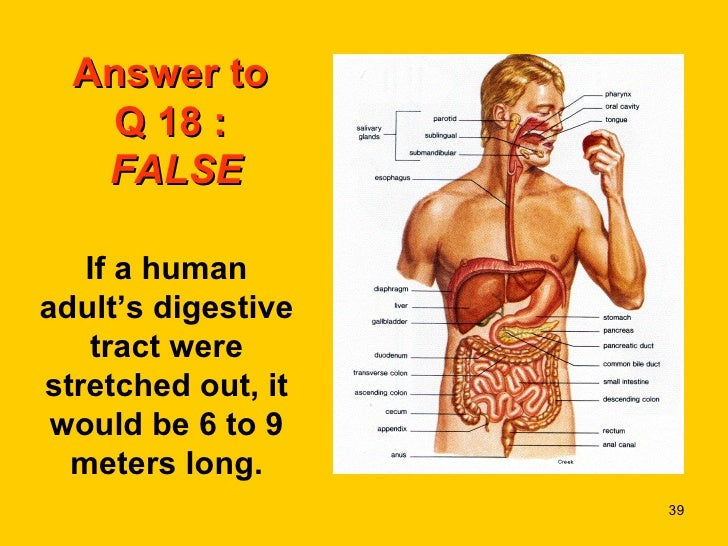 the human bodya fun quiz, Muscles
