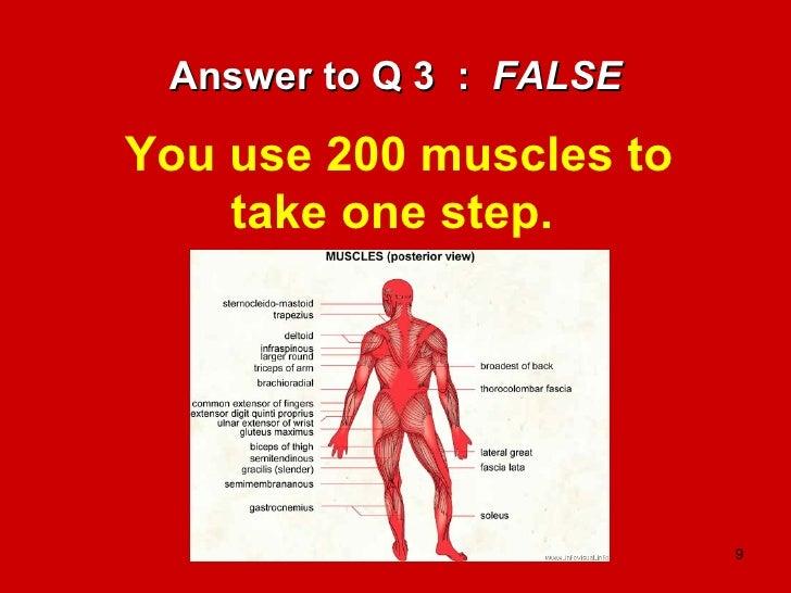 The Human Body   A Fun Quiz