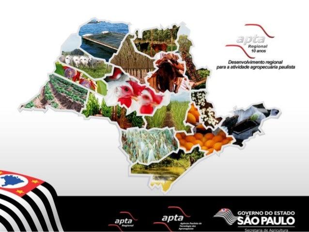 Situação Mundial da Noz Macadâmia  Fonte: II Encontro Nacional da Cadeia Produtiva da Noz Macadâmia - 05 de Dezembro de 20...