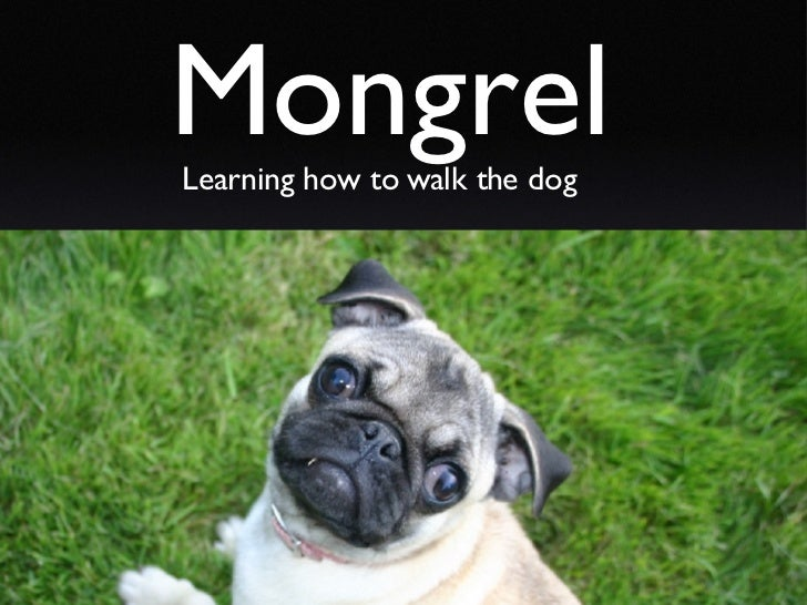 Mongrel Learning how to walk the dog
