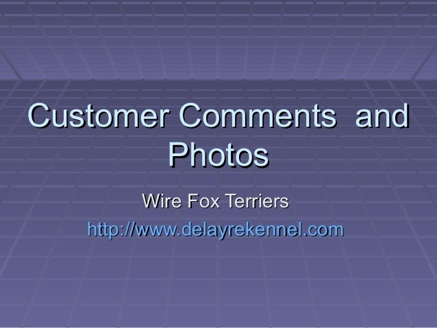 Customer Comments and        Photos          Wire Fox Terriers   http://www.delayrekennel.com