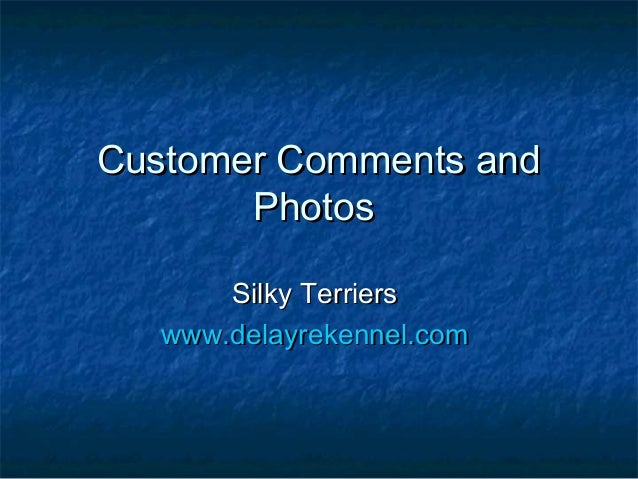 Customer Comments andCustomer Comments and PhotosPhotos Silky TerriersSilky Terriers www.delayrekennel.comwww.delayrekenne...