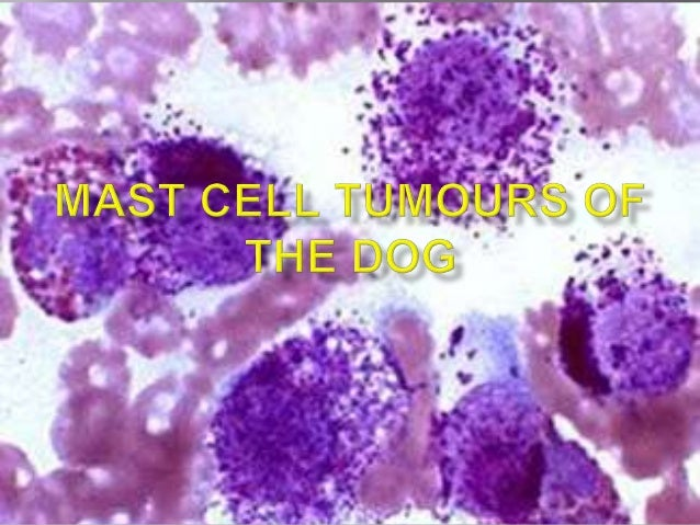 Cutaneous mast cell tumours of the dog