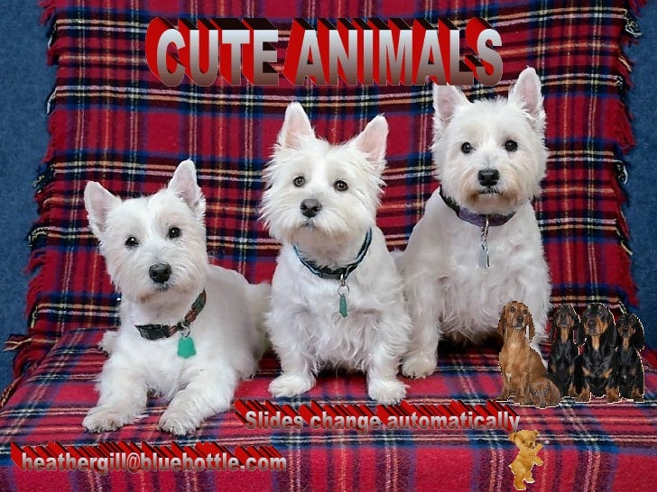 CUTE ANIMALS [email_address] Slides change automatically