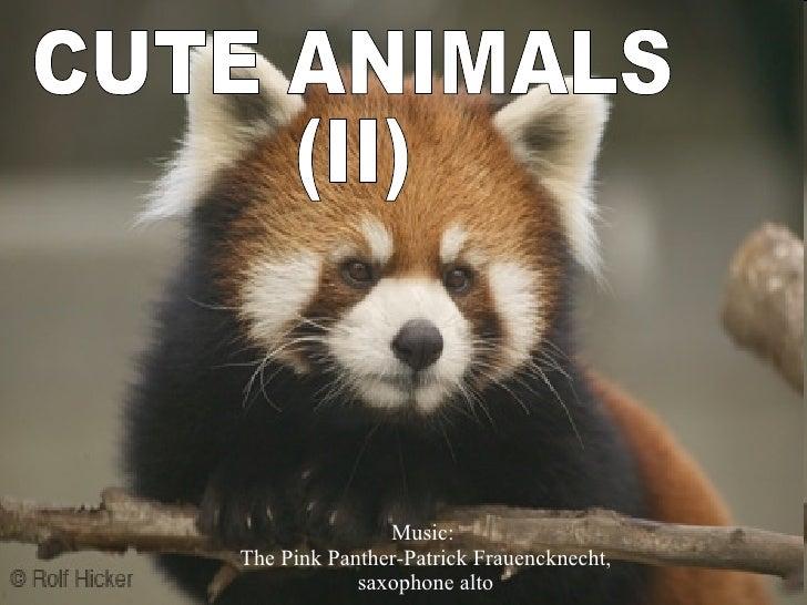 CUTE ANIMALS  (II) Music:  The Pink Panther-Patrick Frauencknecht, saxophone alto