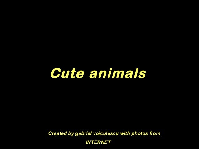 Cute animals Created by gabriel voiculescu with photos from INTERNET