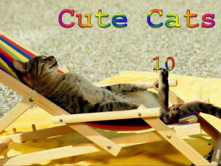 Cute Cats<br />10<br />