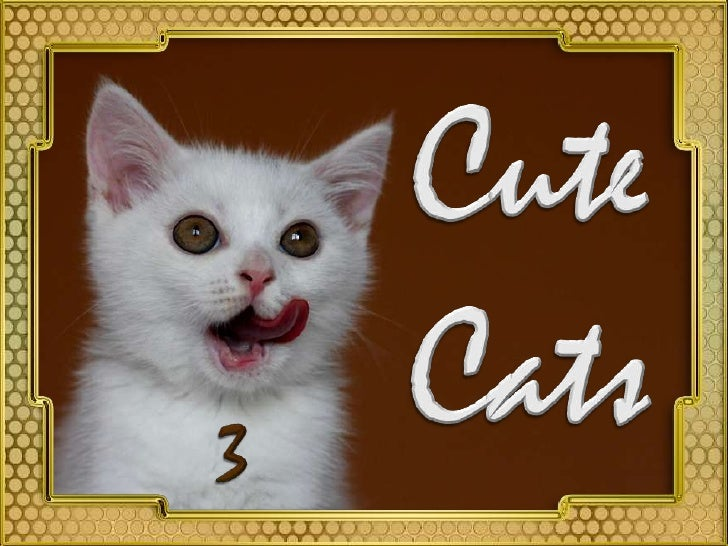 Cute<br />Cats<br />3<br />