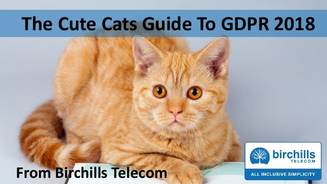The Cute Cats Guide To GDPR 2018 From Birchills Telecom
