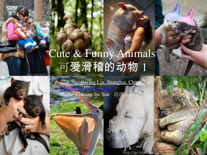 Cute & Funny Animals 1 可爱滑稽的动物 (1)