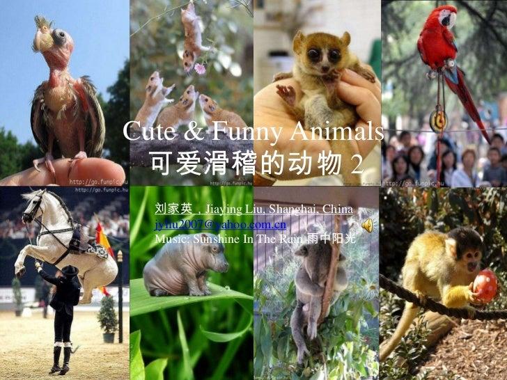 Cute & Funny Animals 2 可爱滑稽的动物 (2).