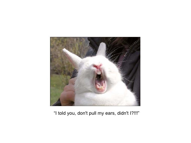 """""""I told you, don't pull my ears, didn't I?!!!"""""""