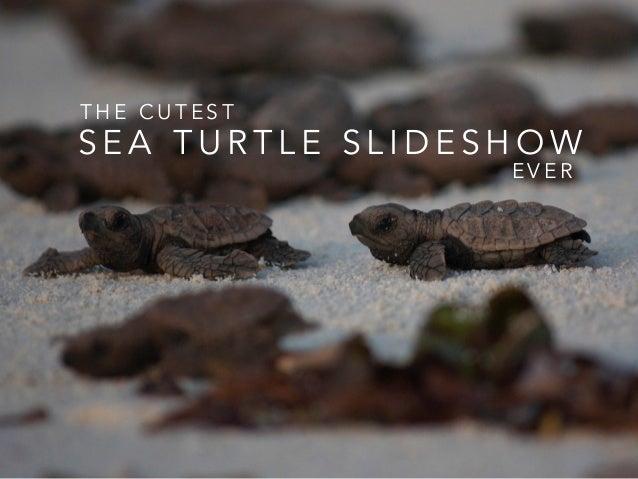 the cutest sea turtle slideshow ever