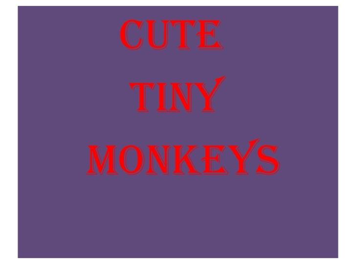Cute <br />          Tiny<br />      monkeys<br />