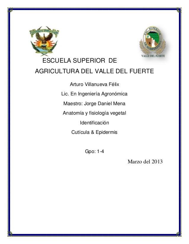 ESCUELA SUPERIOR DEAGRICULTURA DEL VALLE DEL FUERTEArturo Villanueva FélixLic. En Ingeniería AgronómicaMaestro: Jorge Dani...