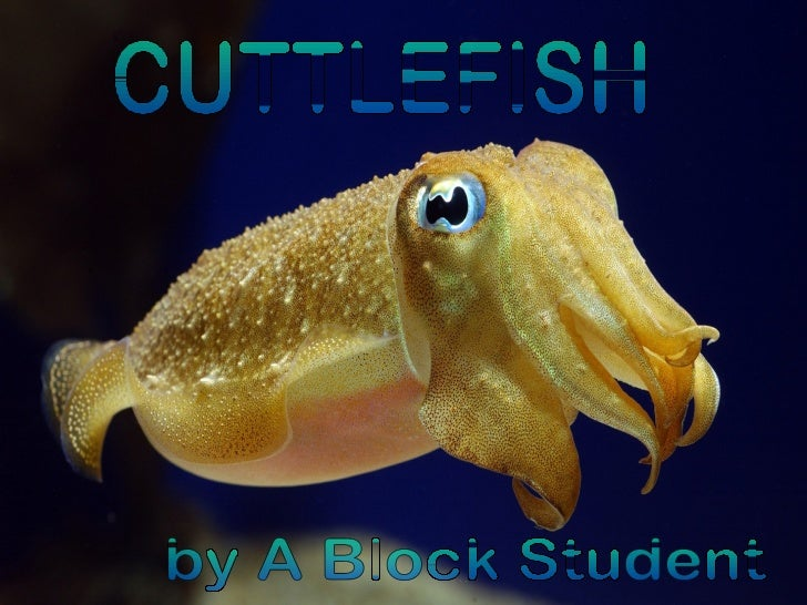 CUTTLEFISH by A Block Student