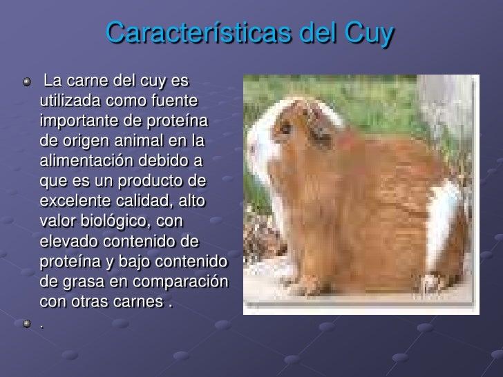 Características del Cuy<br />La carne del cuy es utilizada como fuente importante de proteína de origen animal en la alime...