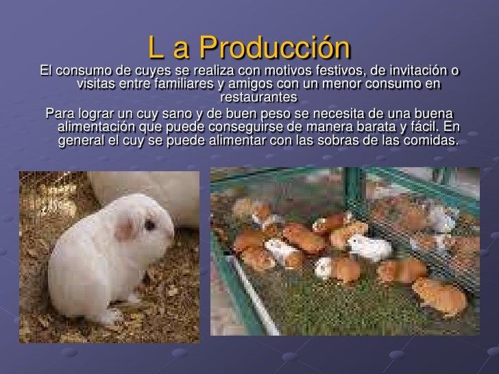 L a Producción<br />El consumo de cuyes se realiza con motivos festivos, de invitación o visitas entre familiares y amigos...
