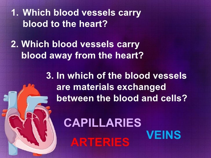 <ul><li>Which blood vessels carry blood to the heart? </li></ul>2. Which blood vessels carry  blood away from the heart? 3...
