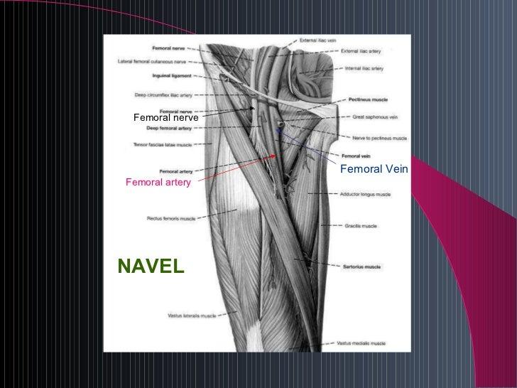 c v c presentation, Muscles