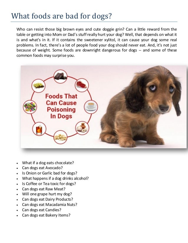 What foods are bad for dogs?
