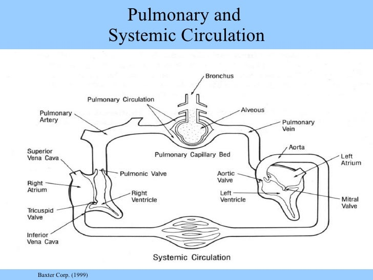 Pulmonary And Systemic Circulation Concept Map.Cvi Fall 2011