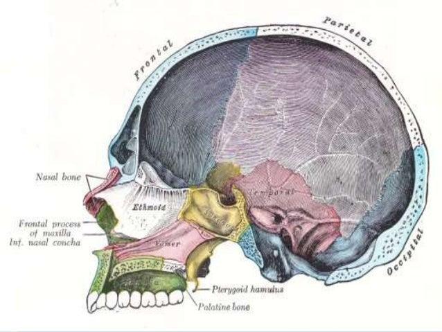 Imaging Of The Craniovertebral Junction